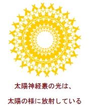 太陽神経叢