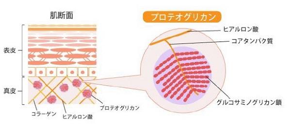 白姫セラム-水溶性プロテオグリカン
