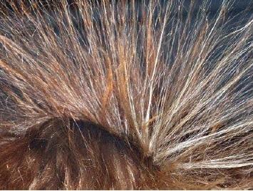 髪はとても繊細なセンサー